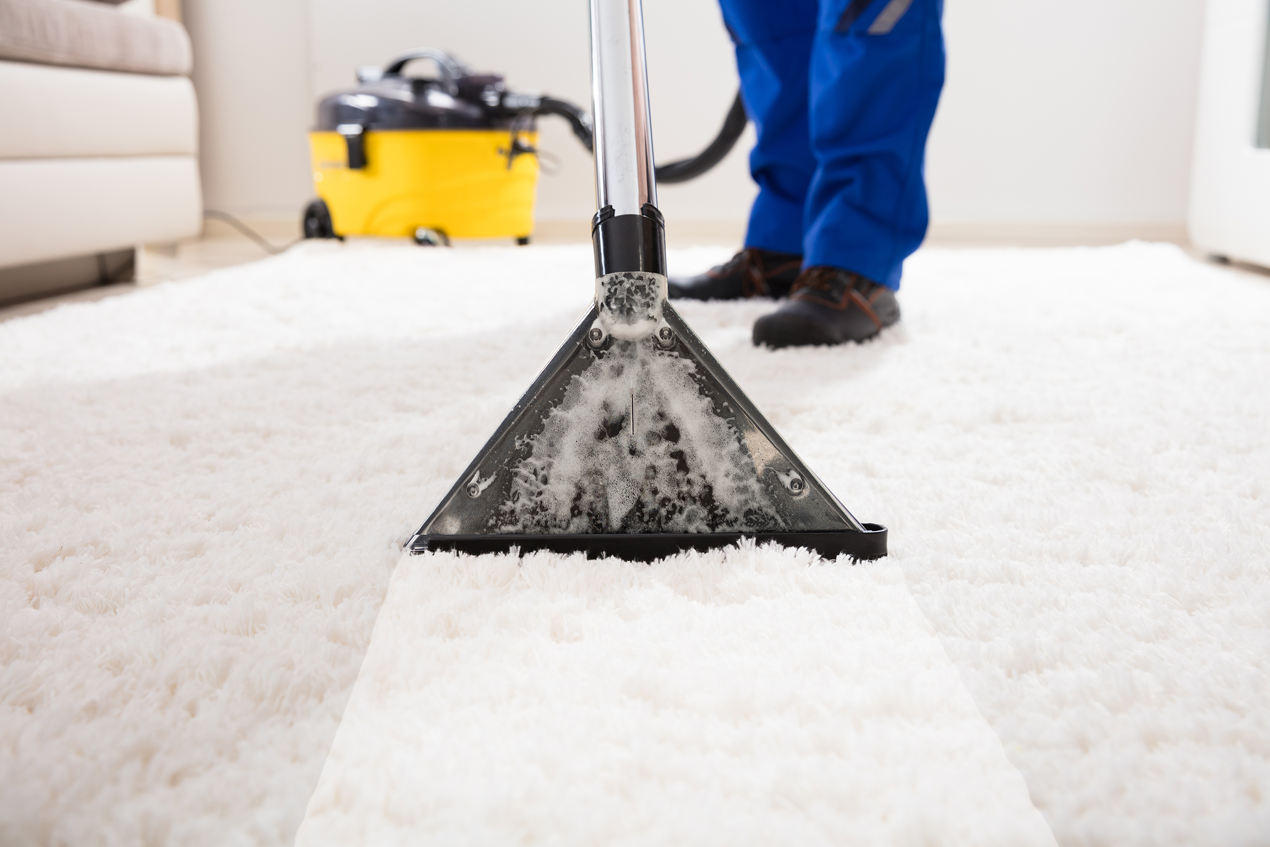 Rino Carpet Cleaning Denver Stain Removal Denver